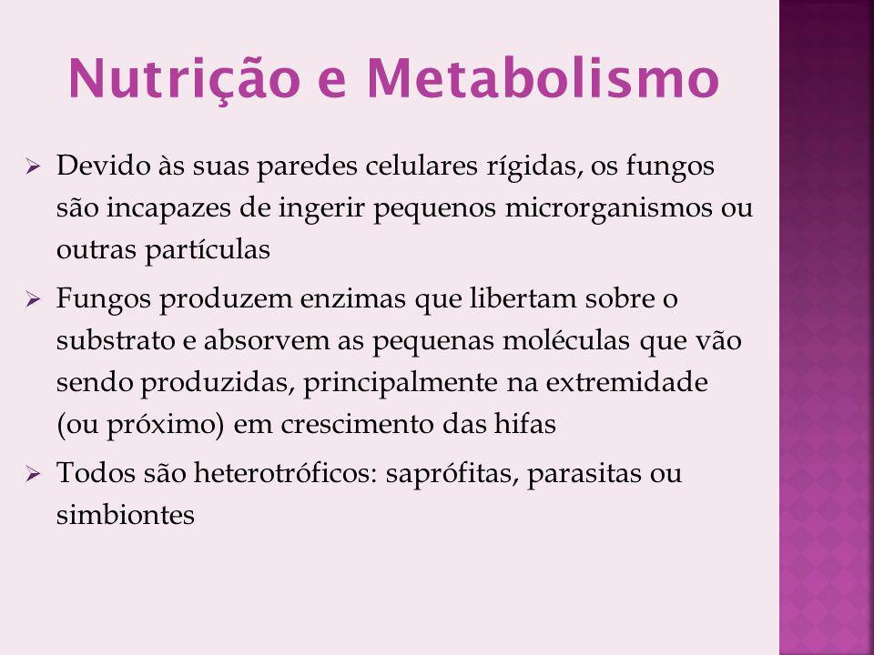 Nutrição e Metabolismo Devido às suas paredes celulares rígidas, os fungos são incapazes de ingerir pequenos microrganismos ou outras partículas Fungo