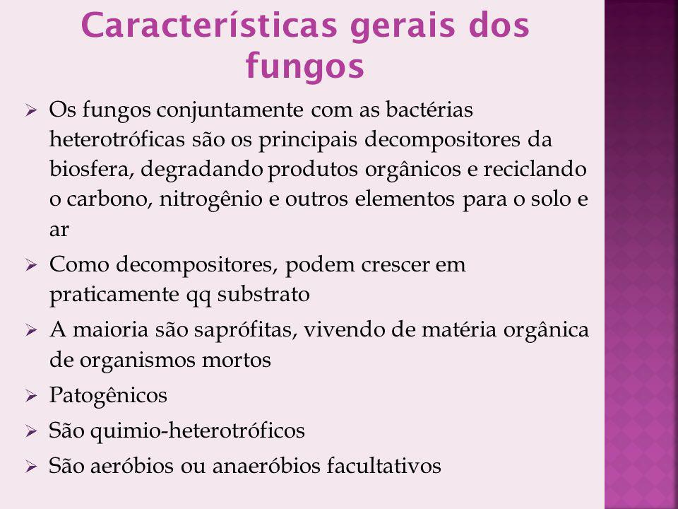 Características gerais dos fungos Os fungos conjuntamente com as bactérias heterotróficas são os principais decompositores da biosfera, degradando produtos orgânicos e reciclando o carbono, nitrogênio e outros elementos para o solo e ar Como decompositores, podem crescer em praticamente qq substrato A maioria são saprófitas, vivendo de matéria orgânica de organismos mortos Patogênicos São quimio-heterotróficos São aeróbios ou anaeróbios facultativos