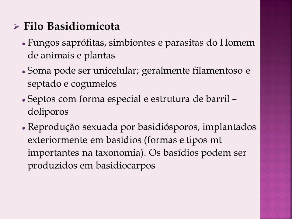 Filo Basidiomicota Fungos saprófitas, simbiontes e parasitas do Homem de animais e plantas Soma pode ser unicelular; geralmente filamentoso e septado e cogumelos Septos com forma especial e estrutura de barril – doliporos Reprodução sexuada por basidiósporos, implantados exteriormente em basídios (formas e tipos mt importantes na taxonomia).