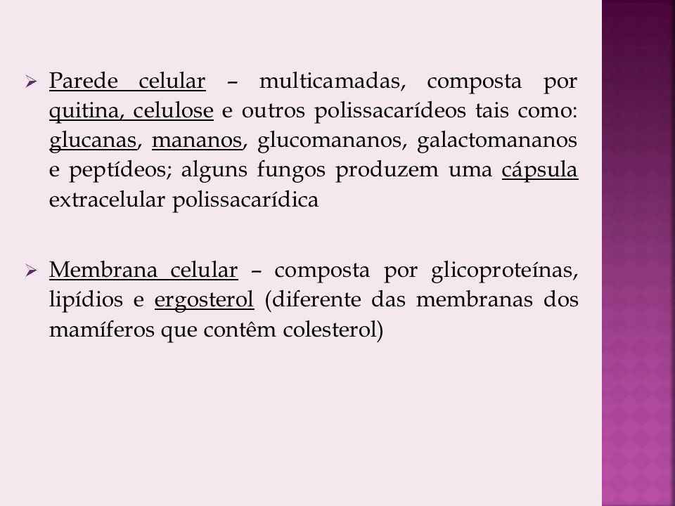 Parede celular – multicamadas, composta por quitina, celulose e outros polissacarídeos tais como: glucanas, mananos, glucomananos, galactomananos e peptídeos; alguns fungos produzem uma cápsula extracelular polissacarídica Membrana celular – composta por glicoproteínas, lipídios e ergosterol (diferente das membranas dos mamíferos que contêm colesterol)