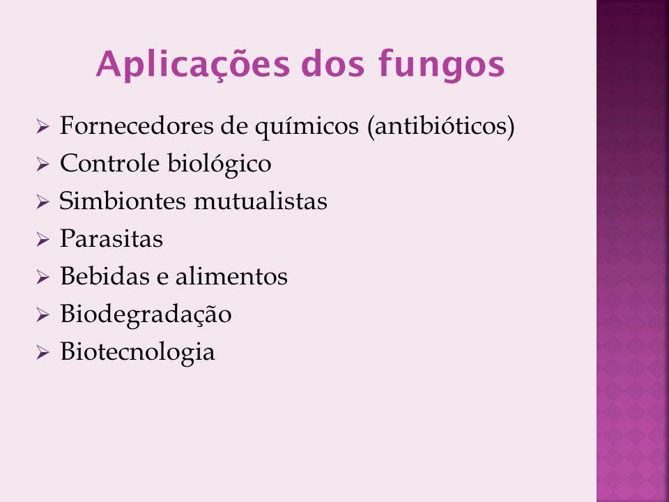 Fornecedores de químicos (antibióticos) Controle biológico Simbiontes mutualistas Parasitas Bebidas e alimentos Biodegradação Biotecnologia