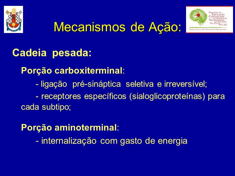 Mecanismos de Ação: Cadeia pesada: Porção carboxiterminal: - ligação pré-sináptica seletiva e irreversível; - receptores específicos (sialoglicoproteí