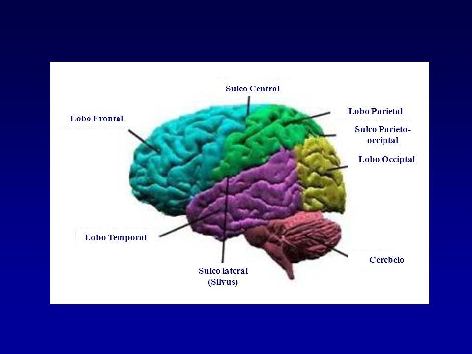 Afasia Perda ou prejuízo da linguagem causada por disfunções em regiões específicadas do cérebro.