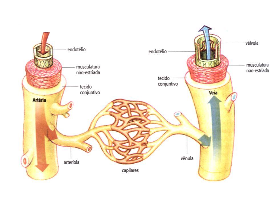 Vasos Funcionais Veias Cavas: coletam o sangue venoso vindo dos tecidos, transportando-o até o átrio direito.