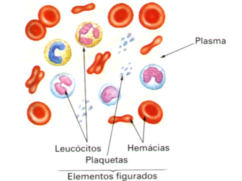 Componentes Leucócitos: São células diferentes em forma, tamanho e tem como função a defesa do organismo.