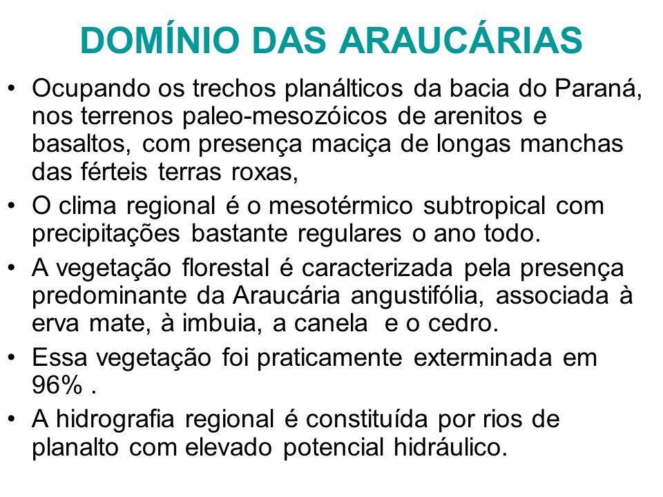 DOMÍNIO DAS ARAUCÁRIAS Ocupando os trechos planálticos da bacia do Paraná, nos terrenos paleo-mesozóicos de arenitos e basaltos, com presença maciça d