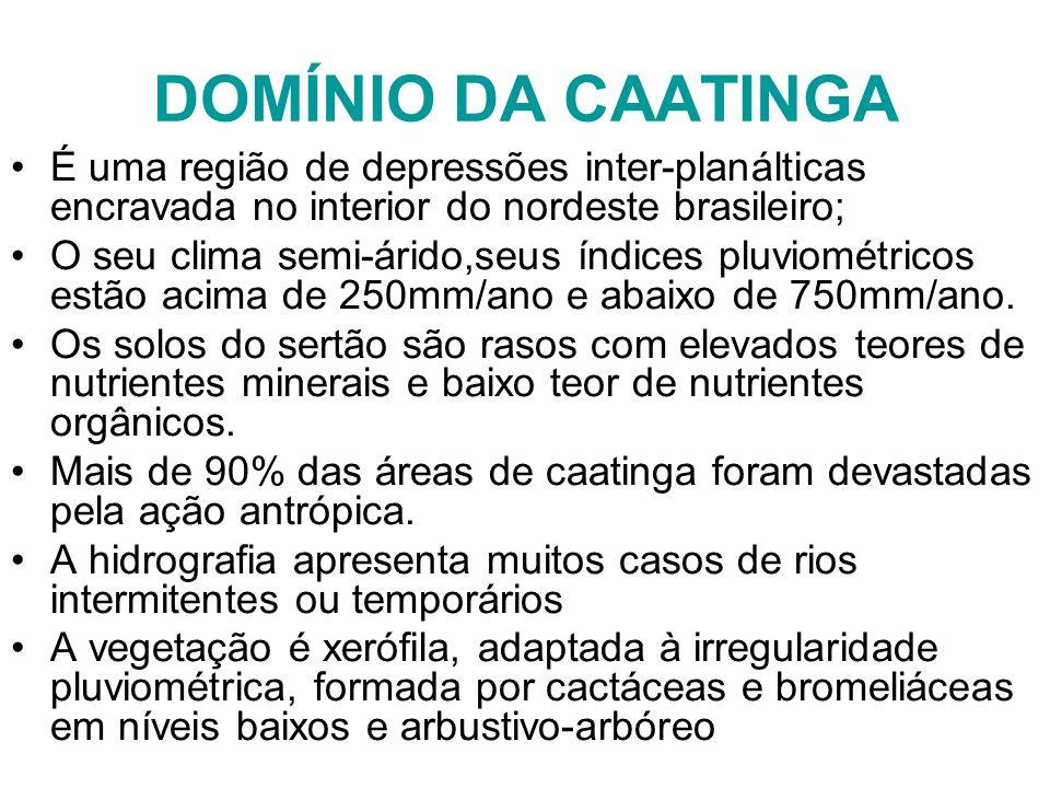 DOMÍNIO DA CAATINGA É uma região de depressões inter-planálticas encravada no interior do nordeste brasileiro; O seu clima semi-árido,seus índices plu