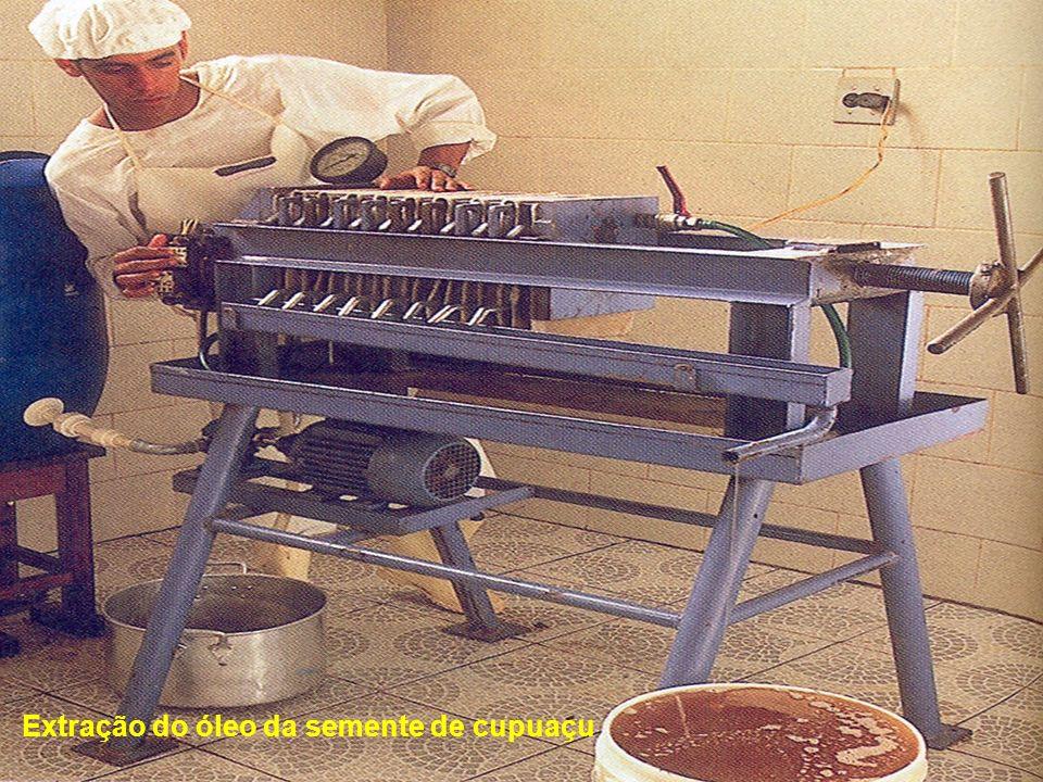 Extração do óleo da semente de cupuaçu