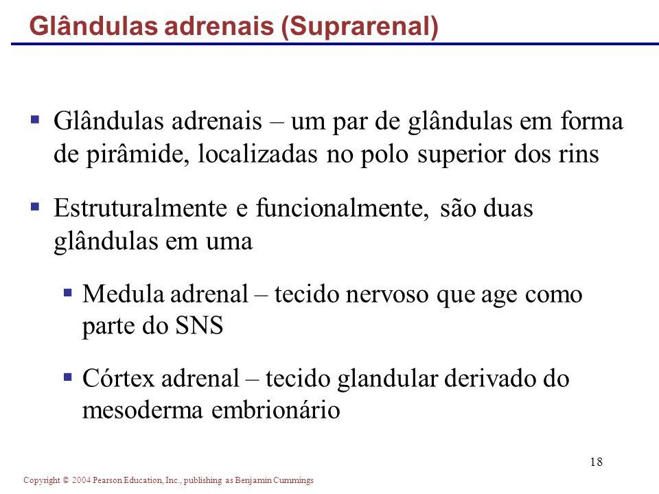 Copyright © 2004 Pearson Education, Inc., publishing as Benjamin Cummings 18 Glândulas adrenais – um par de glândulas em forma de pirâmide, localizada