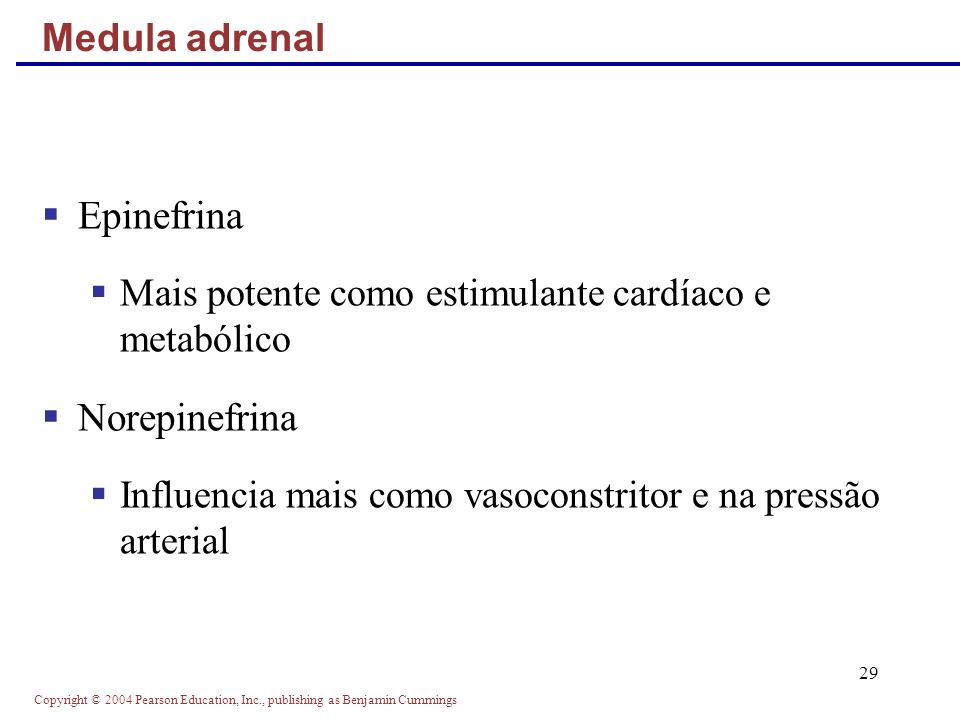 Copyright © 2004 Pearson Education, Inc., publishing as Benjamin Cummings 29 Epinefrina Mais potente como estimulante cardíaco e metabólico Norepinefr