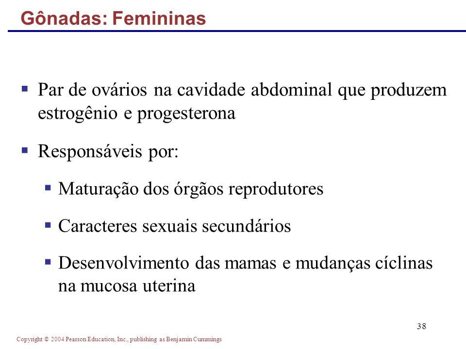 Copyright © 2004 Pearson Education, Inc., publishing as Benjamin Cummings 38 Par de ovários na cavidade abdominal que produzem estrogênio e progestero