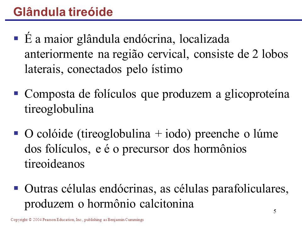 Copyright © 2004 Pearson Education, Inc., publishing as Benjamin Cummings 5 É a maior glândula endócrina, localizada anteriormente na região cervical,