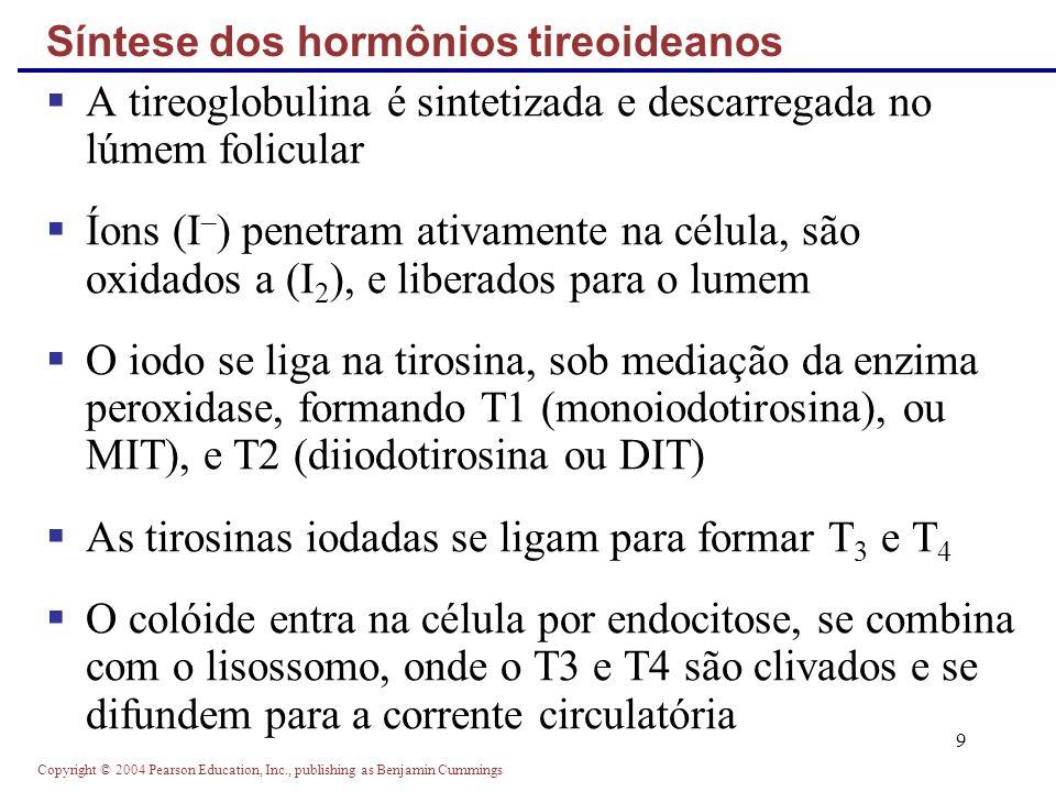 Copyright © 2004 Pearson Education, Inc., publishing as Benjamin Cummings 9 A tireoglobulina é sintetizada e descarregada no lúmem folicular Íons (I –
