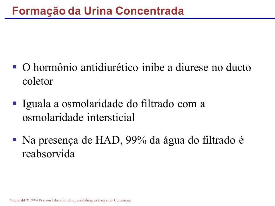Copyright © 2004 Pearson Education, Inc., publishing as Benjamin Cummings Formação da Urina Concentrada O hormônio antidiurético inibe a diurese no du