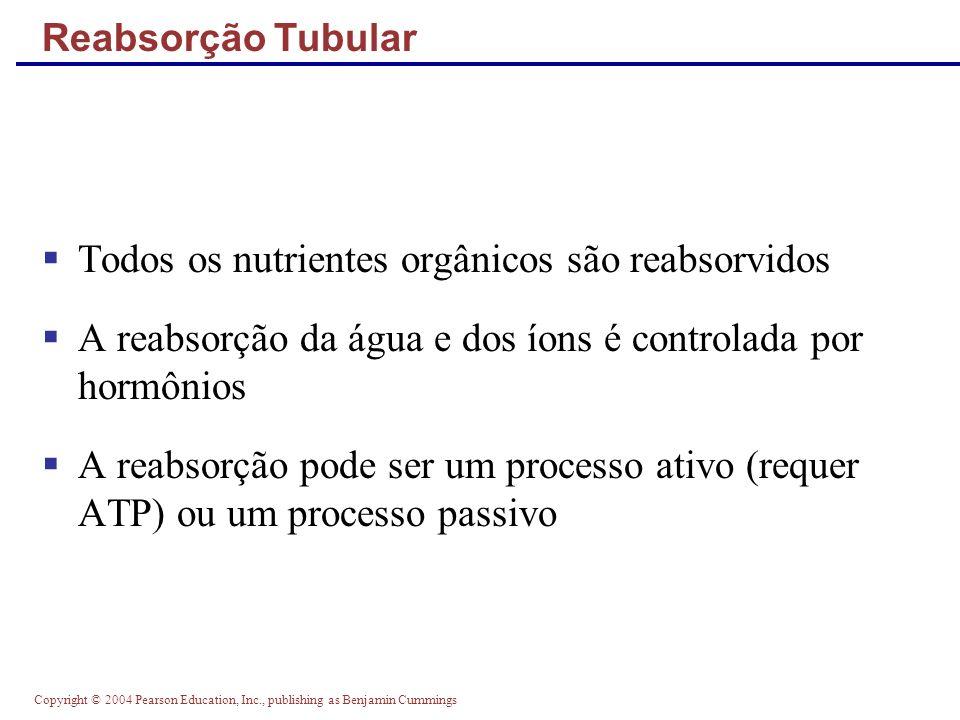 Copyright © 2004 Pearson Education, Inc., publishing as Benjamin Cummings Atividade do Peptídio Natriurético Atrial (PNA) PNA reduz o Na+ sanguíneo e assim: Diminui o volume sanguíneo Diminui a pressão arterial PNA diminui o Na+ sanguíneo por: Agir diretamente nos ductos medulares inibido a reabsorção de Na + Antagonizando os efeitos da angiotensina II Indiretamente aumentando a taxa de filtração glomerular e reduzindo a reabsorção de água