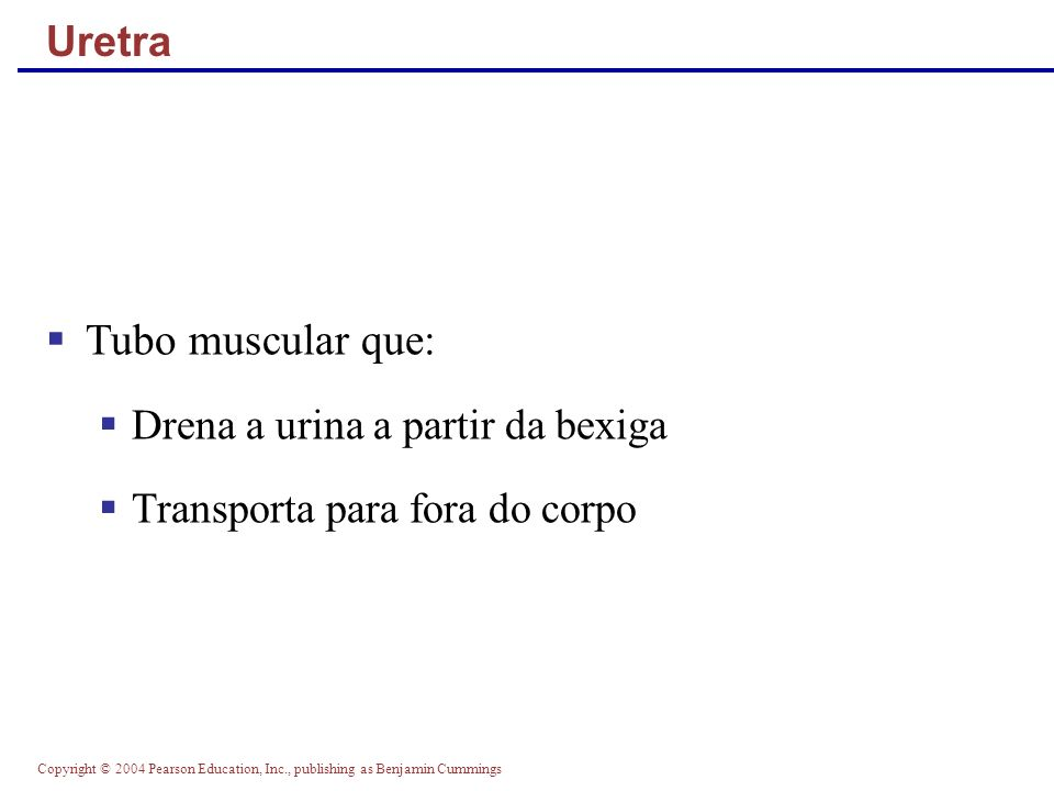 Copyright © 2004 Pearson Education, Inc., publishing as Benjamin Cummings Uretra Tubo muscular que: Drena a urina a partir da bexiga Transporta para f