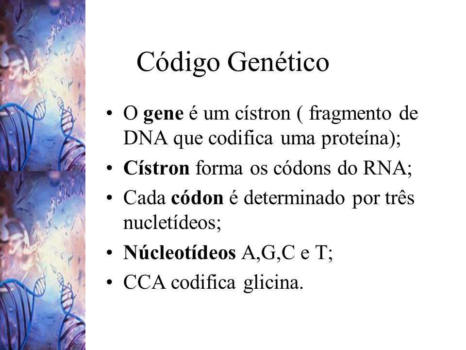 Código Genético O gene é um cístron ( fragmento de DNA que codifica uma proteína); Cístron forma os códons do RNA; Cada códon é determinado por três n