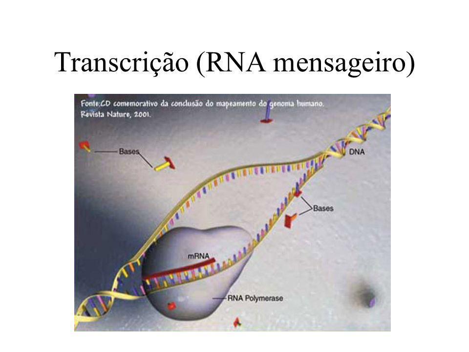 Transcrição (RNA mensageiro)