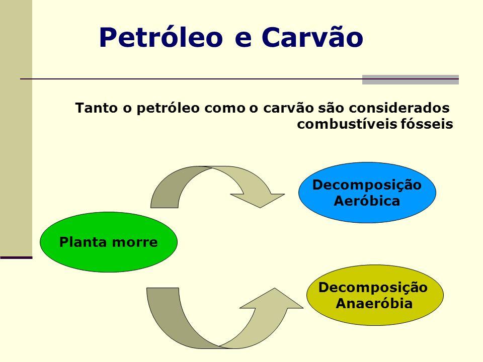 Petróleo e Carvão Tanto o petróleo como o carvão são considerados combustíveis fósseis Planta morre Decomposição Aeróbica Decomposição Anaeróbia