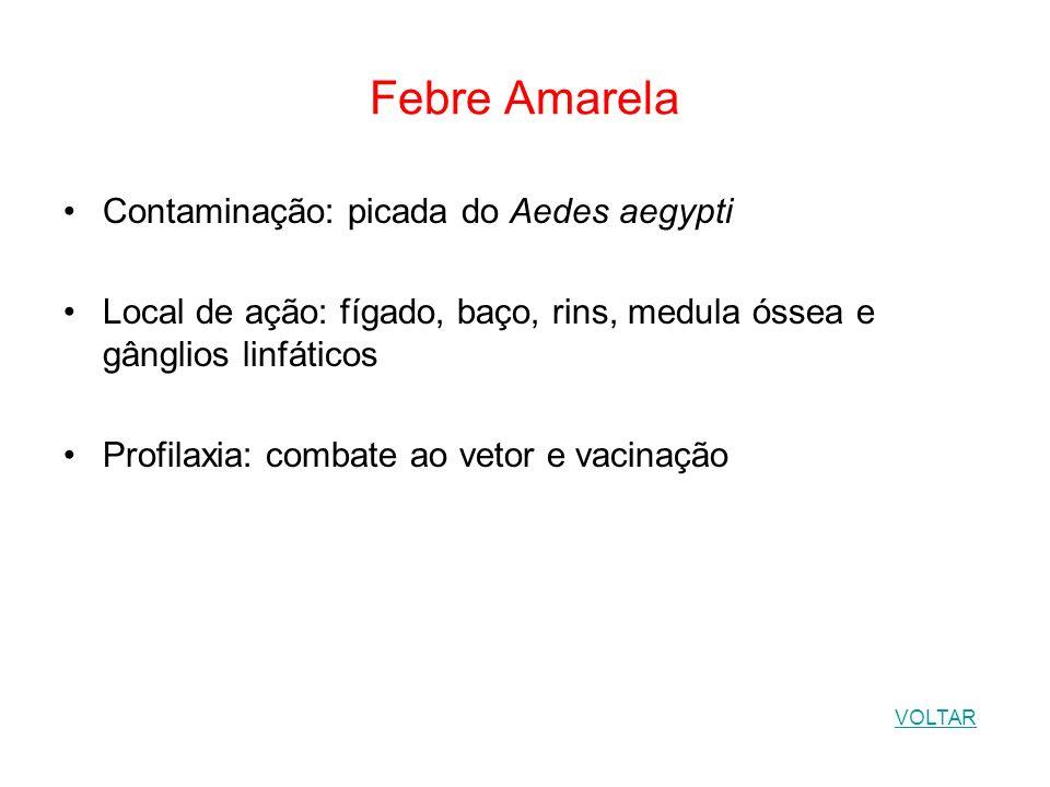 Febre Amarela Contaminação: picada do Aedes aegypti Local de ação: fígado, baço, rins, medula óssea e gânglios linfáticos Profilaxia: combate ao vetor