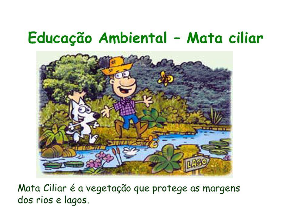 Educação Ambiental – Mata ciliar Material Educativo - Mata Ciliar Mata Ciliar é a vegetação que protege as margens dos rios e lagos.