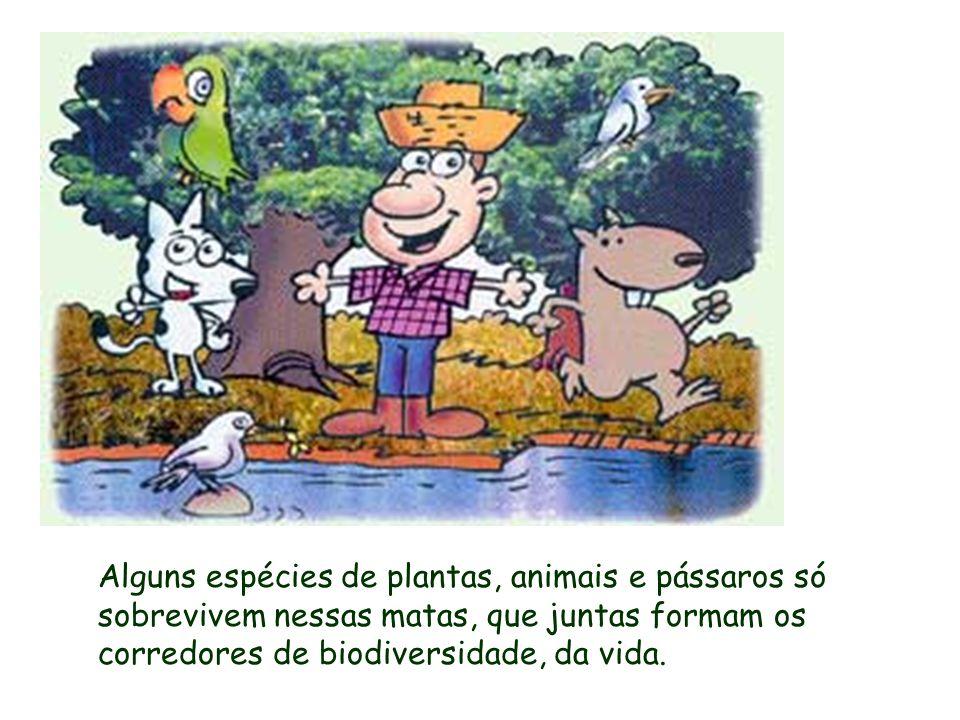 Alguns espécies de plantas, animais e pássaros só sobrevivem nessas matas, que juntas formam os corredores de biodiversidade, da vida.