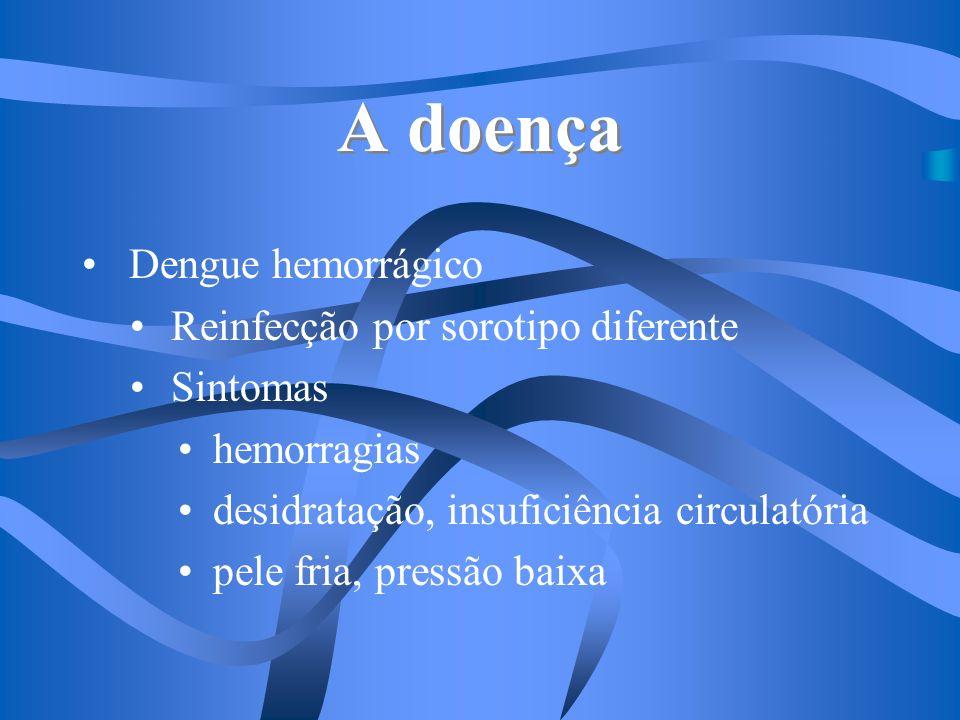 A doença Dengue hemorrágico Reinfecção por sorotipo diferente Sintomas hemorragias desidratação, insuficiência circulatória pele fria, pressão baixa