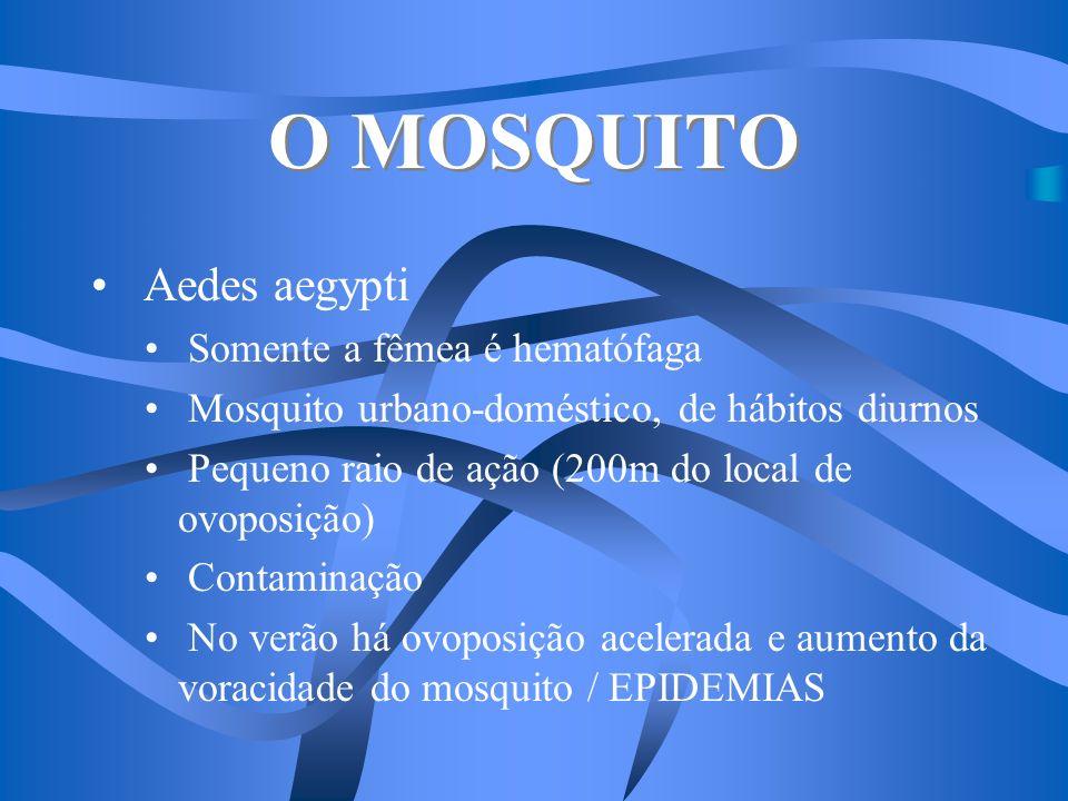 O MOSQUITO Aedes aegypti Somente a fêmea é hematófaga Mosquito urbano-doméstico, de hábitos diurnos Pequeno raio de ação (200m do local de ovoposição)