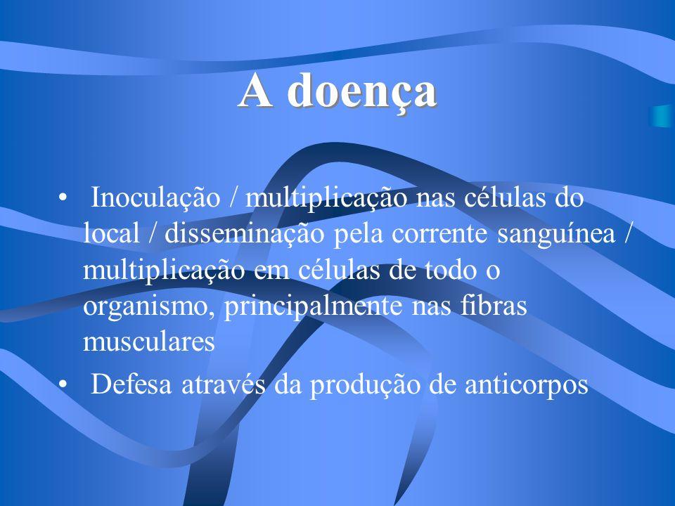A doença Inoculação / multiplicação nas células do local / disseminação pela corrente sanguínea / multiplicação em células de todo o organismo, princi