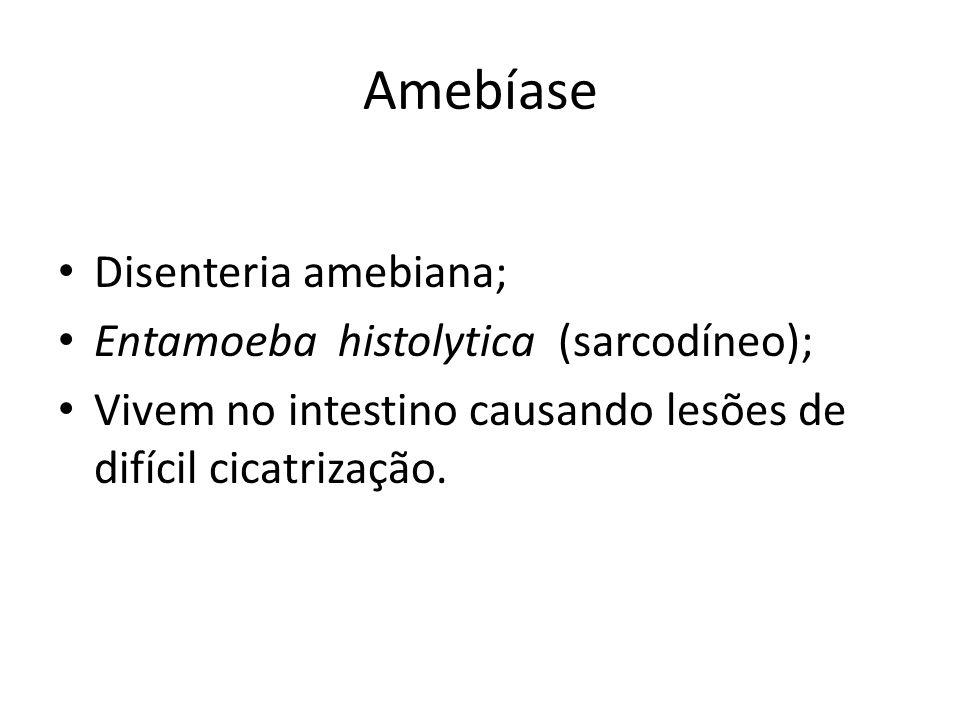 Amebíase Disenteria amebiana; Entamoeba histolytica (sarcodíneo); Vivem no intestino causando lesões de difícil cicatrização.