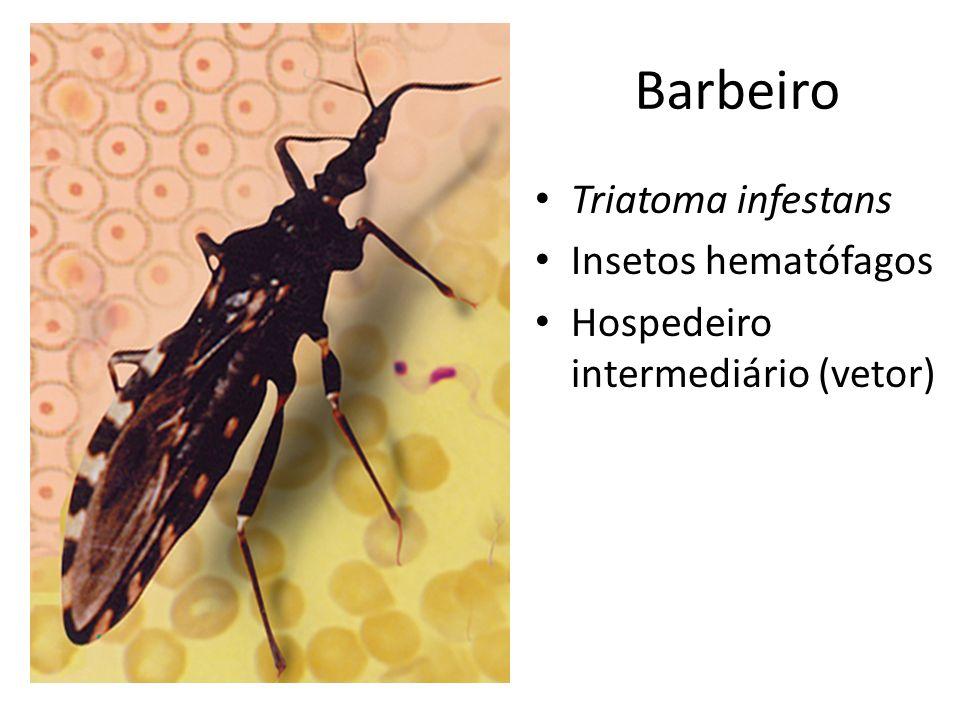 Barbeiro Triatoma infestans Insetos hematófagos Hospedeiro intermediário (vetor)