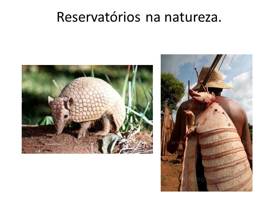 Reservatórios na natureza.