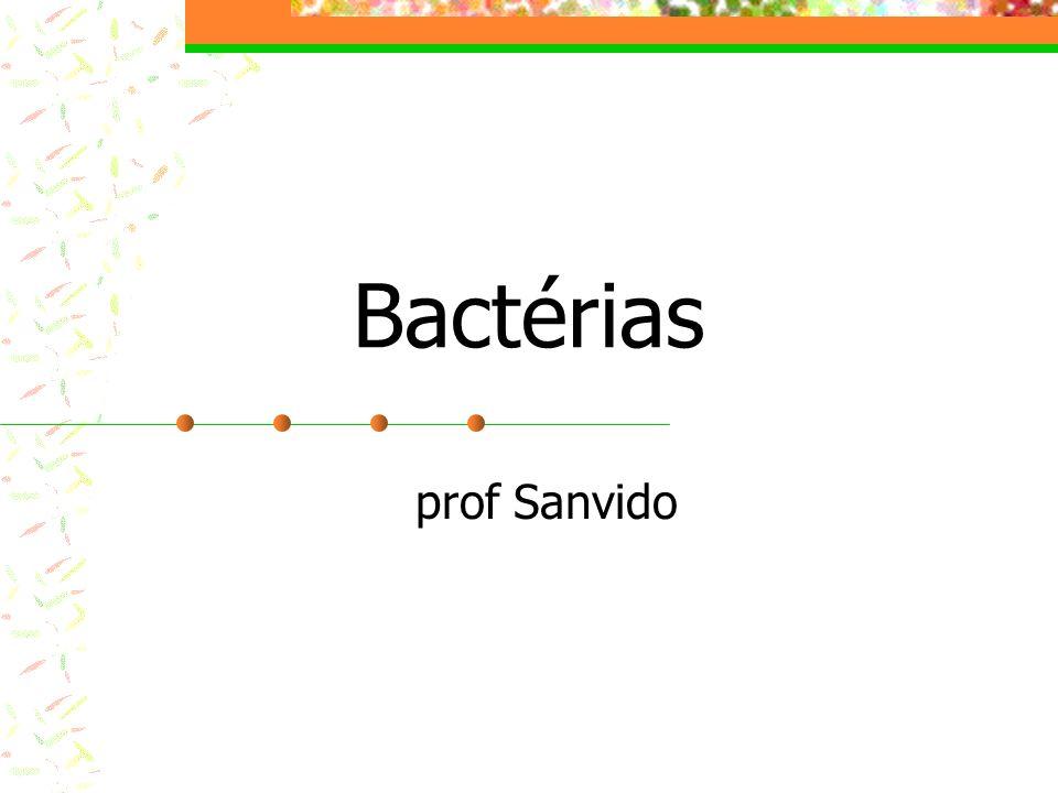 Características Unicelulares Procariontes Sem estruturas membranosas Podem ser patogênicas Usadas na indústria