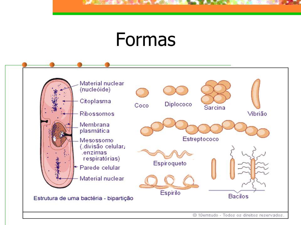Nutrição Autótrofas (quimiossintetizantes) oxidação de matérias inorgânicas Heterótrofas: parasitas simbiontes sapróvoras