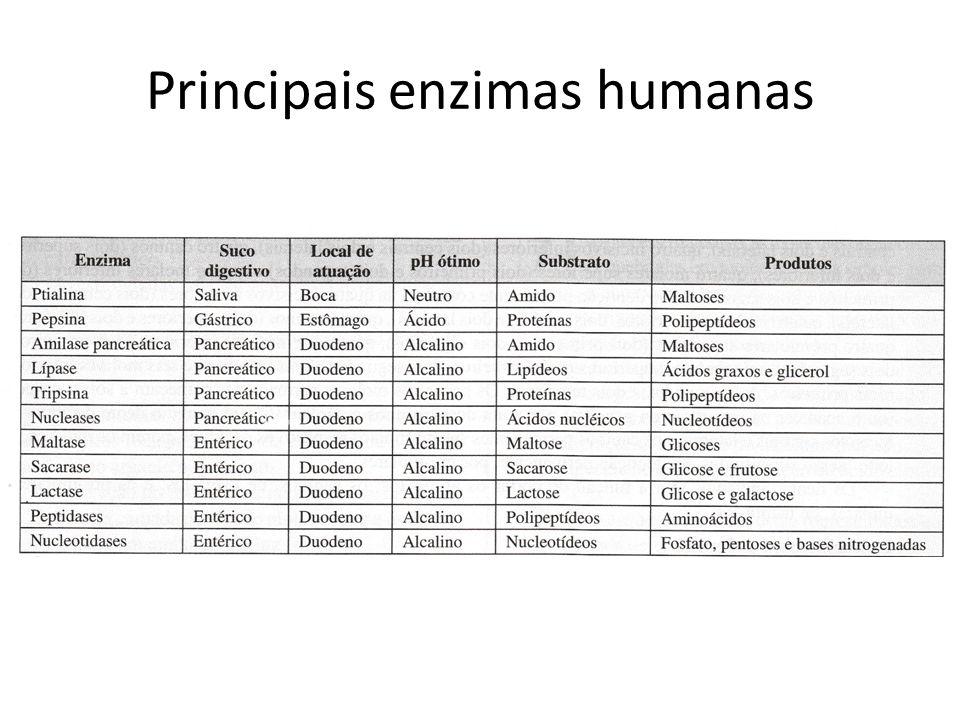 Principais enzimas humanas