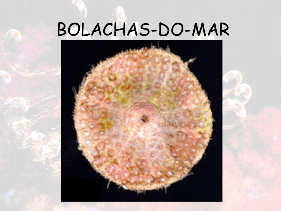 BOLACHAS-DO-MAR