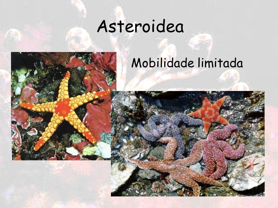 Asteroidea Mobilidade limitada