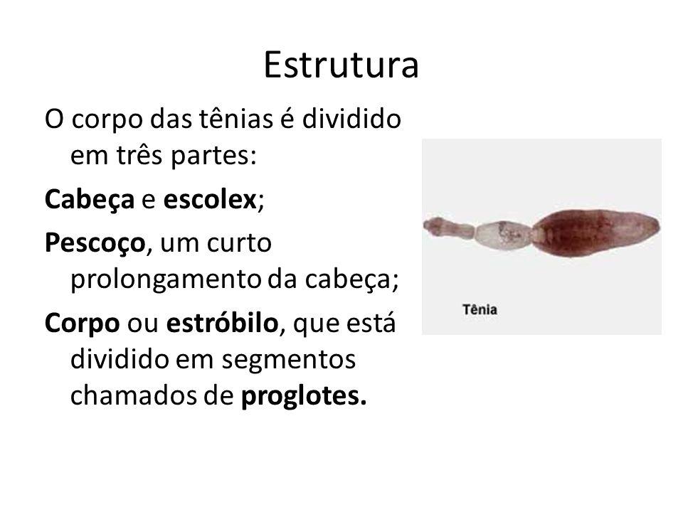 Reprodução São monóicas; Hermafrodita de auto-fecundação; Após a fecundação as proglotes grávidas se desprendem do corpo da tênia e são eliminadas junto com as fezes de quem está infectado.