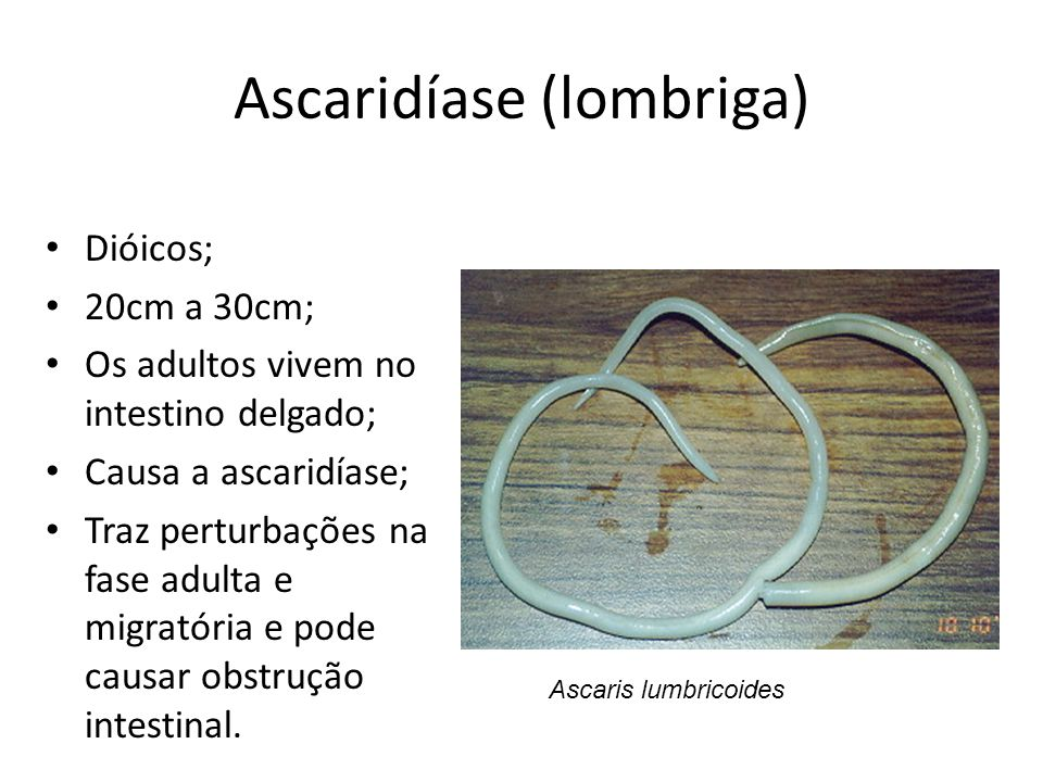 Ciclo Ascaridíase