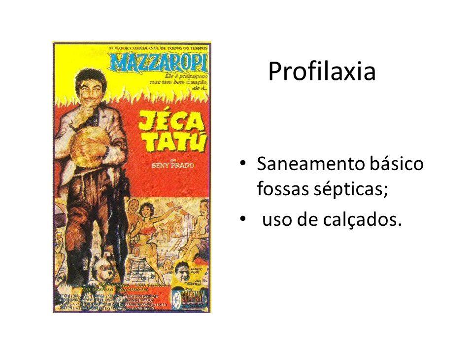 Ancylostoma brasiliensis Parasita cães e gatos (amarelão); Seres humanos – bicho geográfico.
