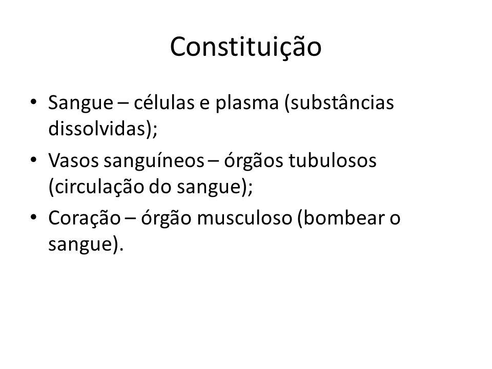 Constituição Sangue – células e plasma (substâncias dissolvidas); Vasos sanguíneos – órgãos tubulosos (circulação do sangue); Coração – órgão musculos