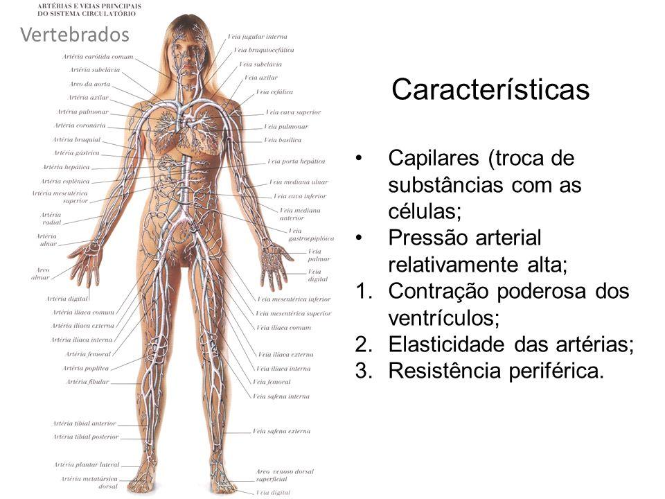 Capilares (troca de substâncias com as células; Pressão arterial relativamente alta; 1.Contração poderosa dos ventrículos; 2.Elasticidade das artérias