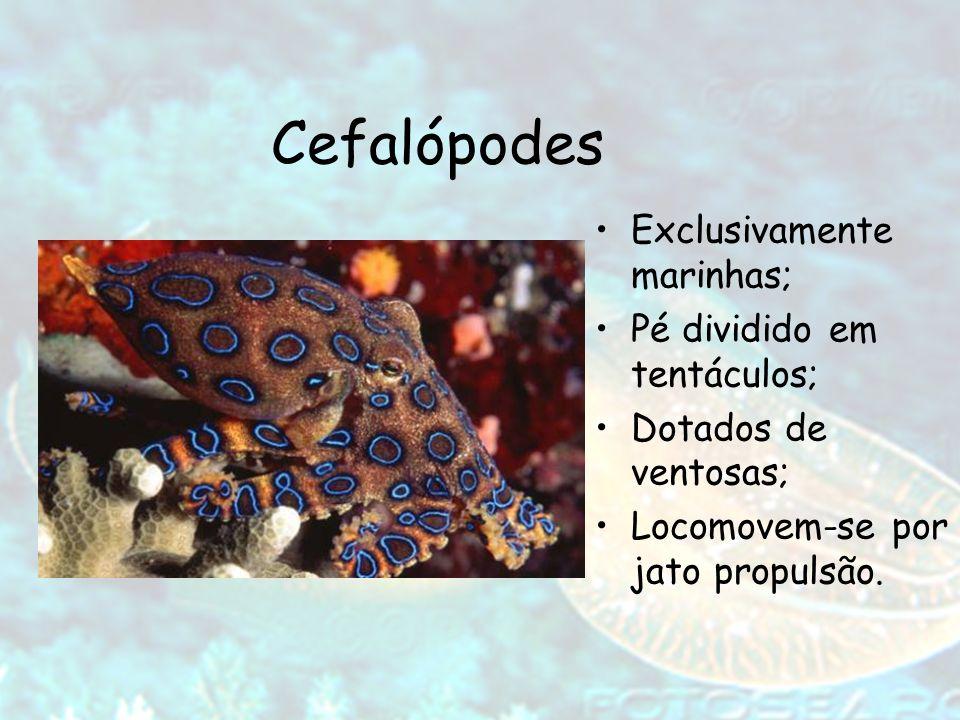 Cefalópodes Exclusivamente marinhas; Pé dividido em tentáculos; Dotados de ventosas; Locomovem-se por jato propulsão.