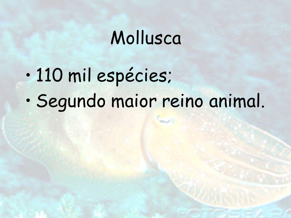 Mollusca 110 mil espécies; Segundo maior reino animal.