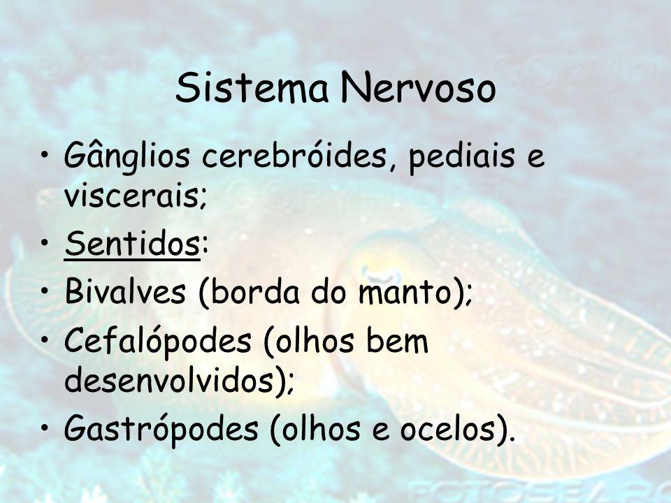 Sistema Nervoso Gânglios cerebróides, pediais e viscerais; Sentidos: Bivalves (borda do manto); Cefalópodes (olhos bem desenvolvidos); Gastrópodes (ol