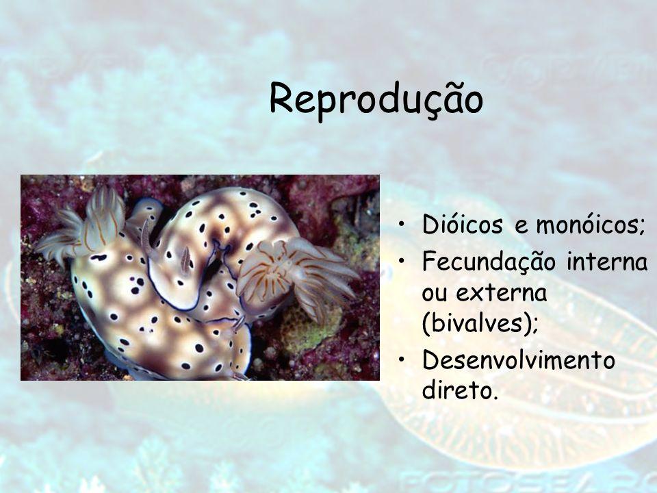 Reprodução Dióicos e monóicos; Fecundação interna ou externa (bivalves); Desenvolvimento direto.