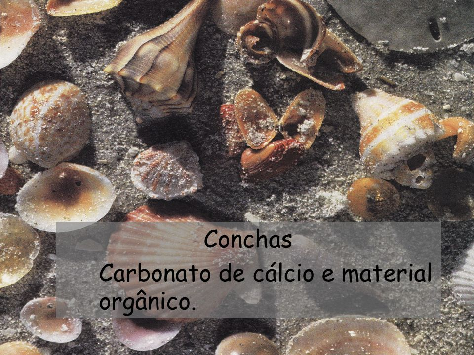 Conchas Carbonato de cálcio e material orgânico.