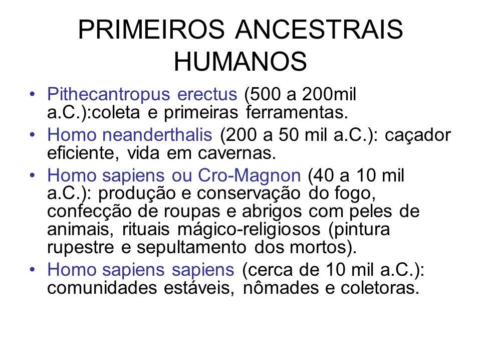 PRIMEIROS ANCESTRAIS HUMANOS Pithecantropus erectus (500 a 200mil a.C.):coleta e primeiras ferramentas. Homo neanderthalis (200 a 50 mil a.C.): caçado