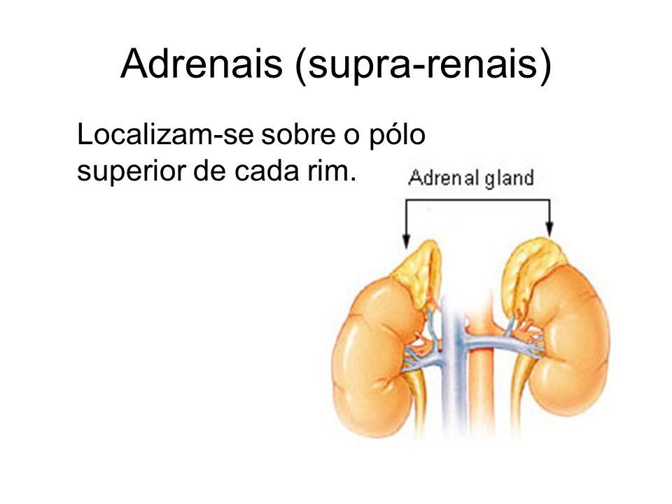 Adrenais (supra-renais) Localizam-se sobre o pólo superior de cada rim.