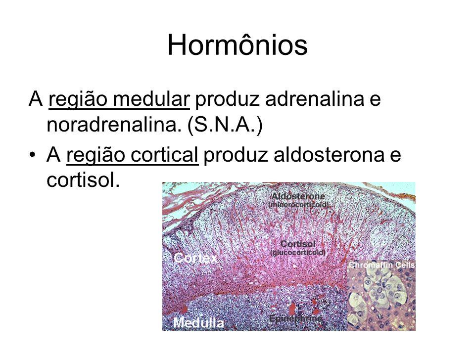 Hormônios A região medular produz adrenalina e noradrenalina. (S.N.A.) A região cortical produz aldosterona e cortisol.